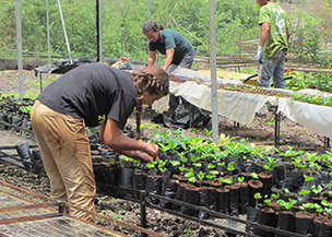 Cultivating plants in the Galapagos